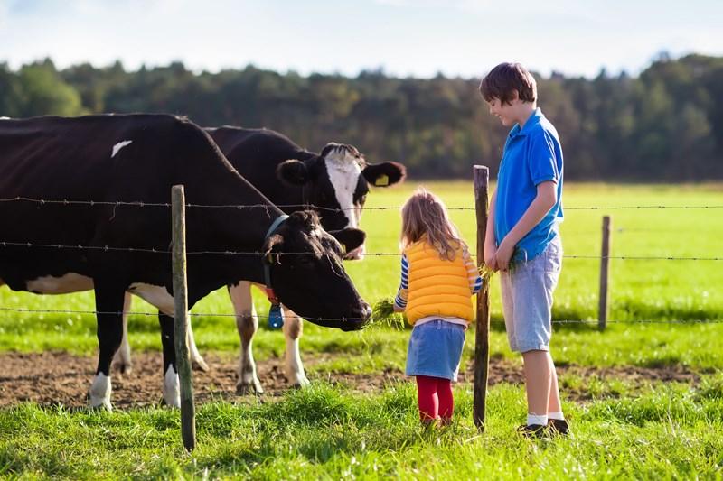 Subsidieregeling Jonge Landbouwers