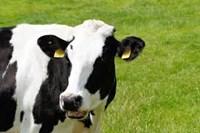 Begrotingsnormen lange termijn melkveehouderij 2019